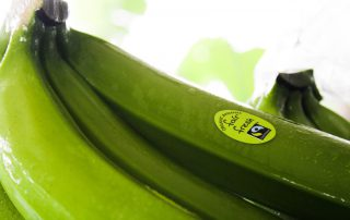 Green banana not ripened