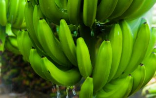 Racimo de bananas lavado