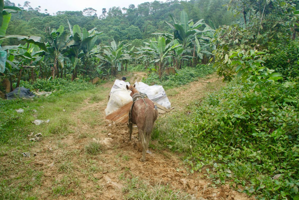 Productor agroforestal