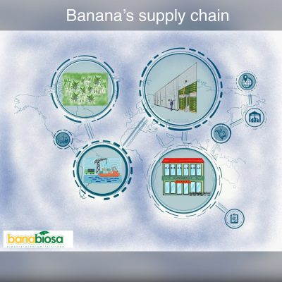 Banana´s supply chain