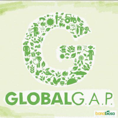Logo global GAP